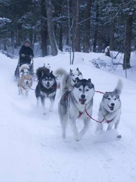 Dog team on the downhill.